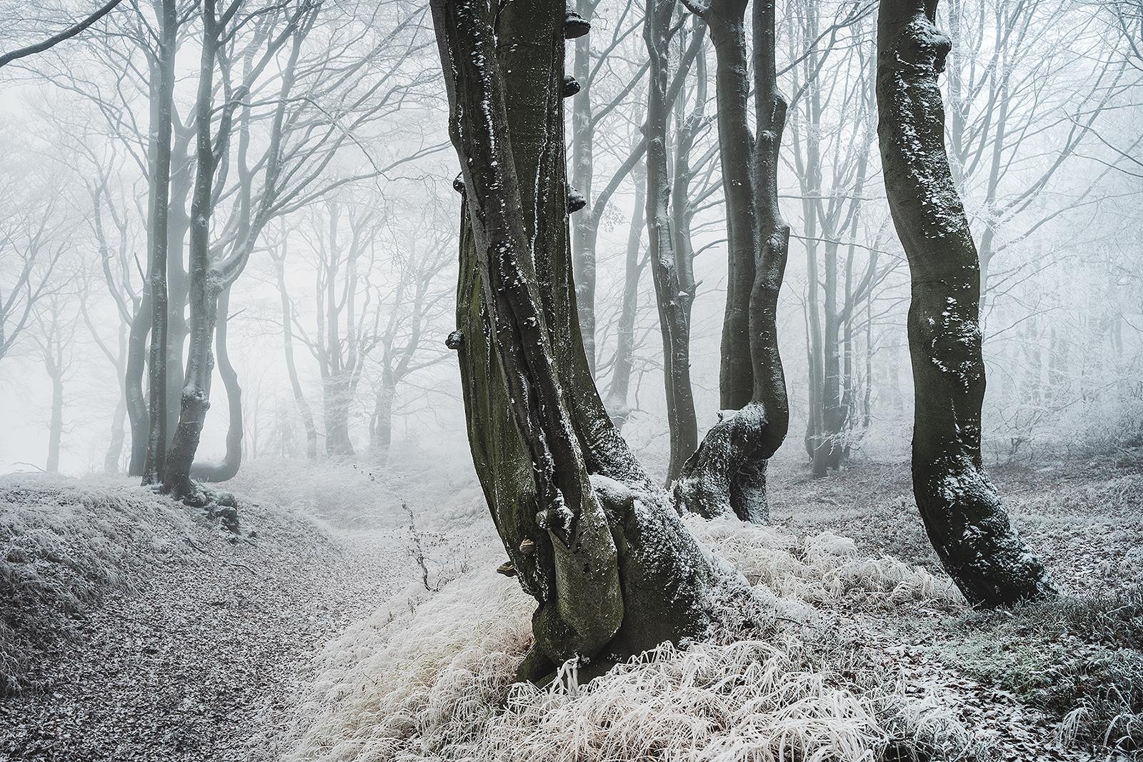 Bukový les v Krušných horách