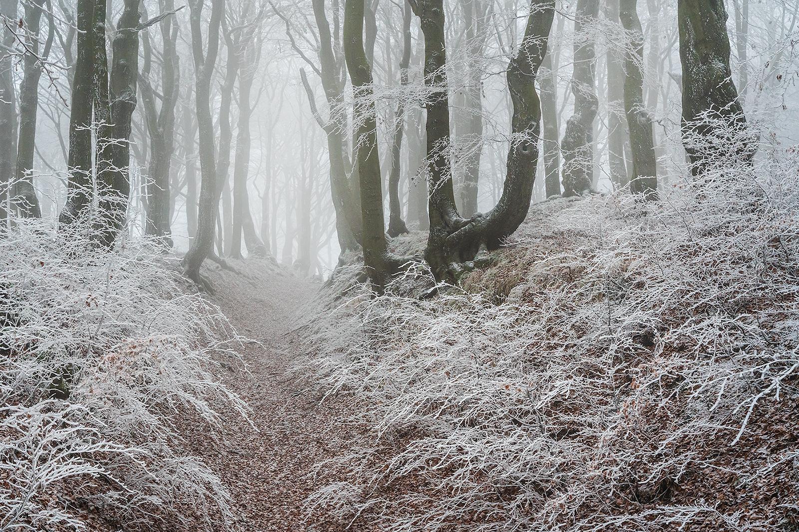 Les v Krušných horách