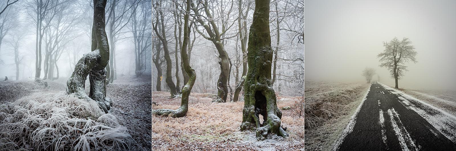 Stromy krušných hor